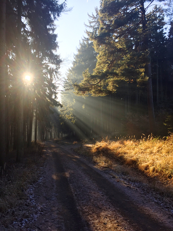Selbsterkenntnis Hochbegabung Spiritualitaet Hamburg
